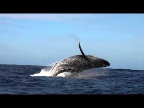 marine mammals of Hawaii