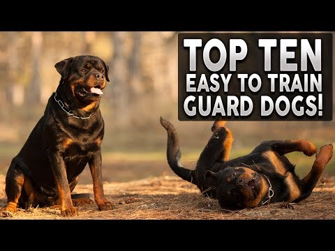 top-10-easy-to-train-guard-dog-breeds!