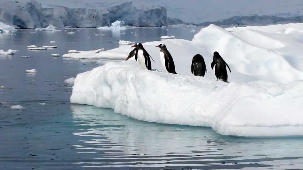 penguin fail hd real penguins playing in antarctica on new