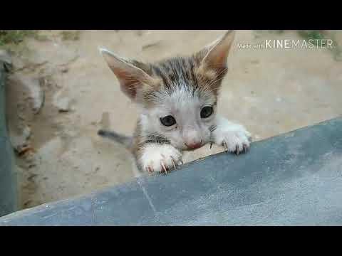 बिल्ली के छोटे बच्चों की अटखेलियां।  Funny cat compilation