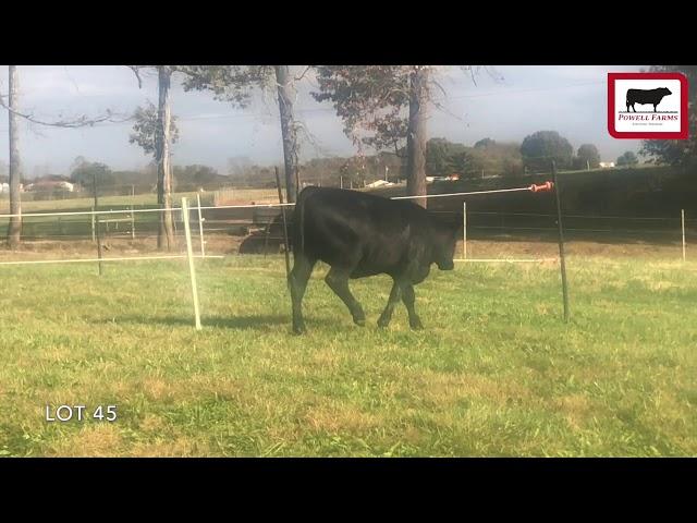 Powell Farms Lot 45