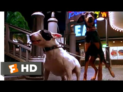 Babe: Pig in the City (1998)  Dog Chase Scene (3/10) | Movieclips