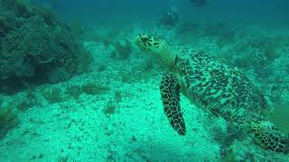 Manchones National Park | Turtles on the reef