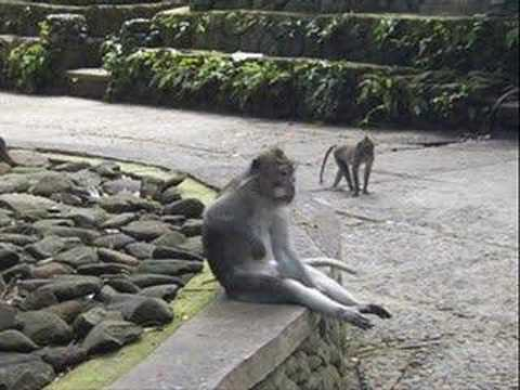 Brass Monkey  Beastie Boys