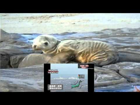 Fukushima Food t☢ EU, SICK Animals on W Coast. N Korea, India Nuclear Update 1/8/16