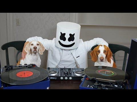 Dogs DJ w/Marshmello! Funny Dogs Maymo & Potpie Spin EDM Music