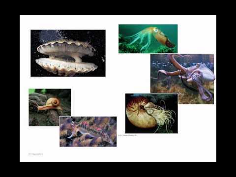 Bilateria: Spiralia Clade