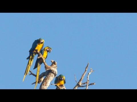 Nature: Parrots in Peru