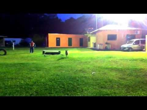 CANIL GUARDA E PROTECAO - TREINO BOPE - FERNANDO SOARES 2