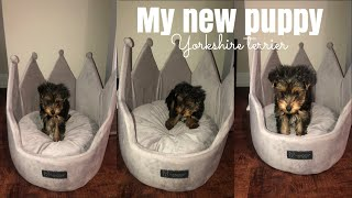 I GOT A PUPPY! | Teacup Yorkie | YEMI ASHIANNA