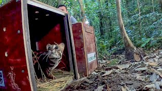 Releasing Rescued Animals Back Into The Wild | BBC Earth