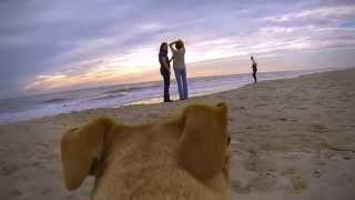 My Dog Wearing The Gopro Walking On The Beach At Oak Island, Nc (watch In Hd)