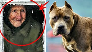 A grandmother adopted a pitbull. A year later, the neighbors heard a scream