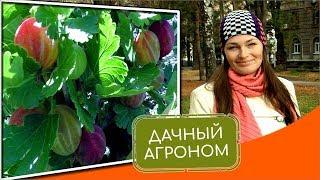 7 вопросов о малине смородине крыжовнике ежевике Советы садоводам Уход и выращивание #дачныйагроном