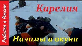 Активатор клева Fishhungry (Голодная рыба): развод или нет ...
