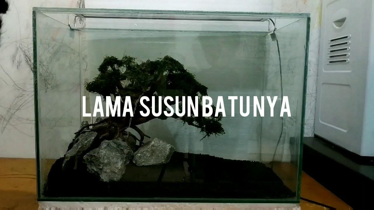 Bonsai Aquascape Part 1 Tank 50x30x35 - YouTube