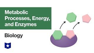 Metabolic Processes, Energy, and Enzymes | Biology