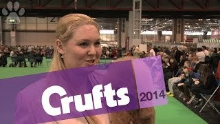 Miniature Poodle | Best Of Breed | Crufts 2014
