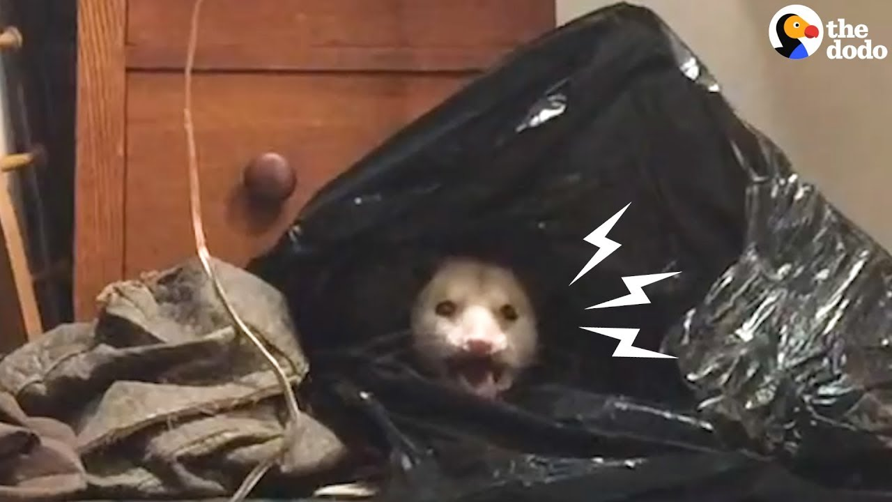 Woman Finds The Most Adorable Thing Hiding In Her Closet  | The Dodo