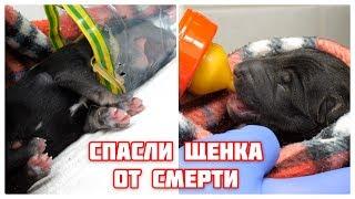 Спасли родившегося щенка от смерти. Взял 9 щенят и маму с улицы.