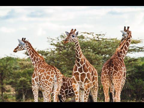 Introducing Kenya