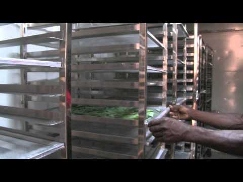 High-tech herbal teas with a Caribbean flavour