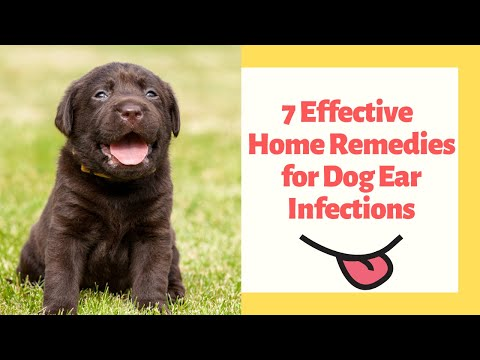 7 Effective Natural Home Remedies for Dog Ear Infections