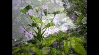 The Prettiest Flowers w. Lyrics