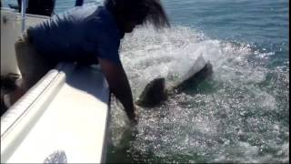 when fish attack back compilation