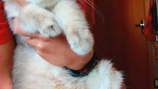 Знаете кто самый красивый в мире кот?