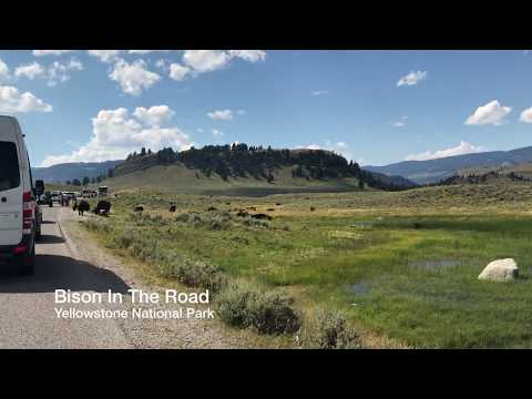 Yellowstone National Park - Bison in the Road (2018)