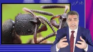 اعجاز القران حول النمل والموت
