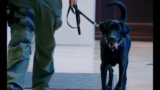 Meet Willie, the Ravens' Newest Security Dog