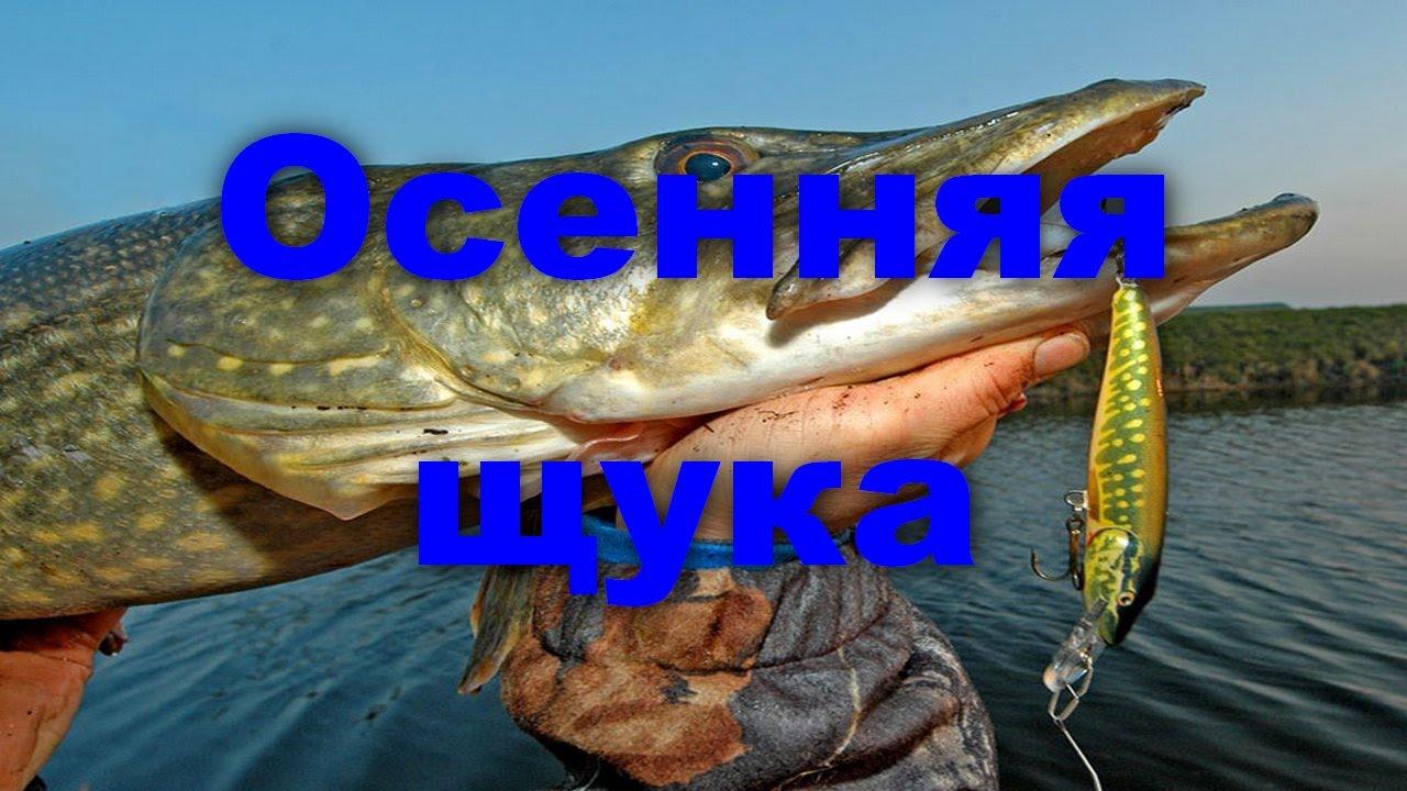 рыбалка на ивинском разливе видео