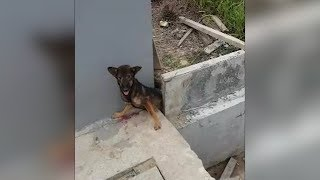 Man saves a trapped dog