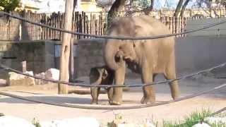 állatkert közös kenőcs gyógyszer a vállízület blokkolására