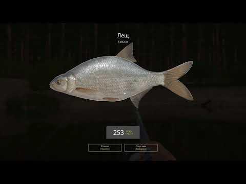 Русская рыбалка 4 - Река Вьюнок - Покрупнела ли рыба? Часть1.
