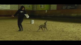 Харахурсах Елена мексиканская голая собака (ксолоитцкуинтли) ЕЖЕВИКА ИЗ ПОЛЕТА МЕЧТЫ
