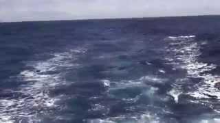 950+ Lb Blue Marlin Crash Teaser Bite