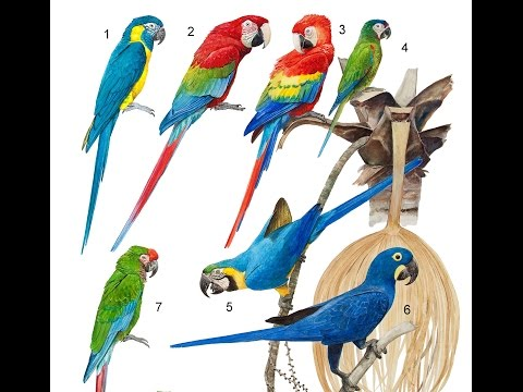 types of macaw(top breeds from macaw all our the world & very beautyful parrot)
