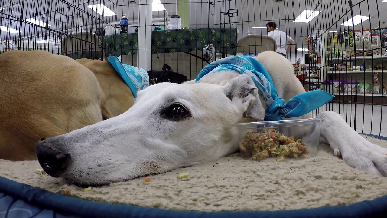 Pet Life Grooming Grand Re-Opening