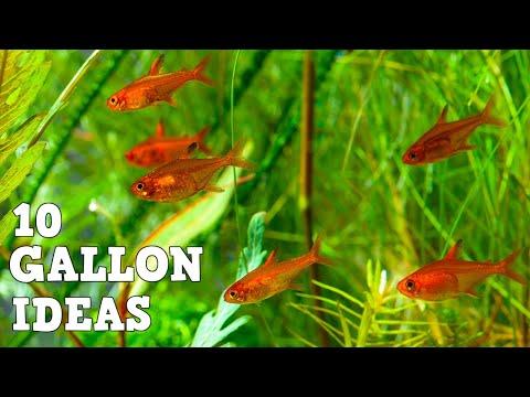 10 Amazing Fish For A 10 Gallon Aquarium With Aquarium Co Op