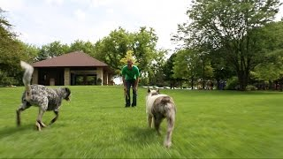 Dog Training Chicago | Canine Peace of Mind | Scott Harris