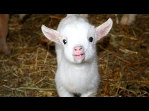Cutest animal sounds - Funny and cute animal compilation