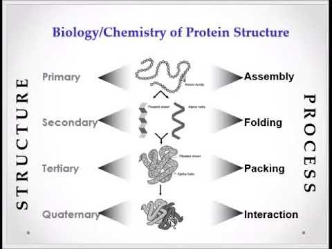 Ramachandran Plot In Arabic Youtube