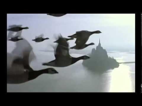 o video o voo dos gansos