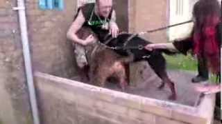 RSPCA Video - The Dog Rescuers Episode 5