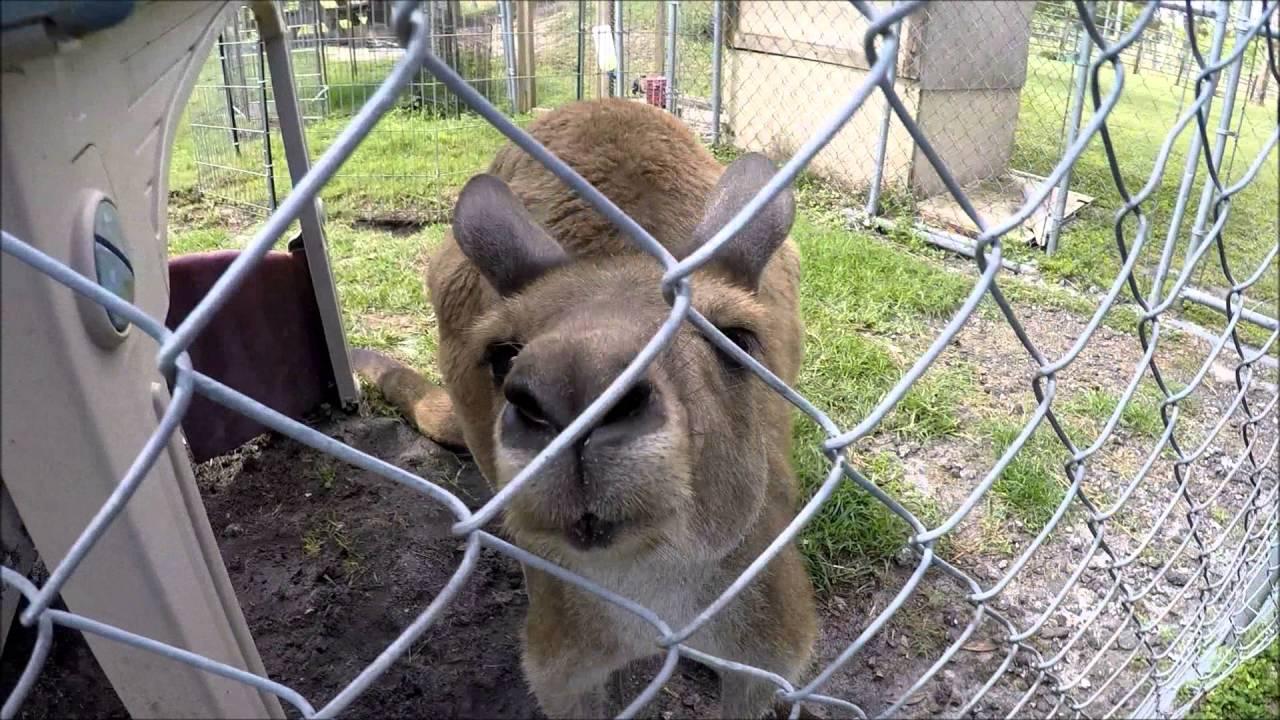 Exotic Animal Experience Orlando - YouTube