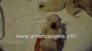 Q:i have a shetland sheepdog mix my vet said that he should only ta...