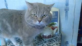 Не злой КОТ разговаривает, говорит пять котят нормально VivаVideo. Открой милое видео, матом не орёт